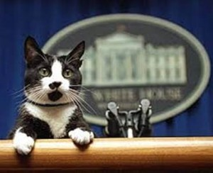 White House Kitty