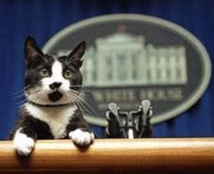 White House Kitty